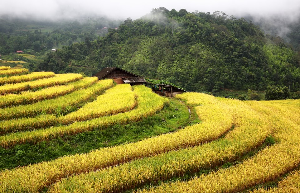 Yellow terraces dotted with small houses - Vietnam visa