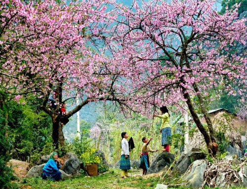 Why should you visit Vietnam in spring?